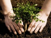 Plant a tree and save the world