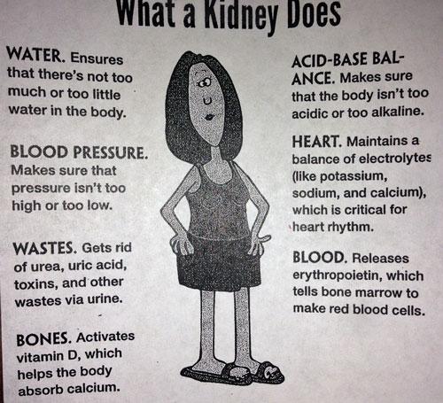 Kidney-function