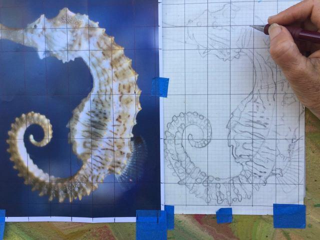 Seahorse progress