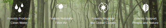 forest_positives